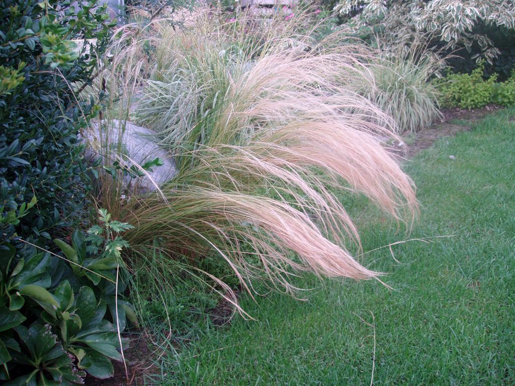 Dettaglio piante il giardino creazione e manutenzione for Piante graminacee ornamentali
